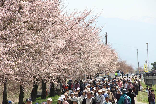 溝延桜まつり・楽しく歩こう会